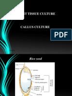 KIVT Callus Culture