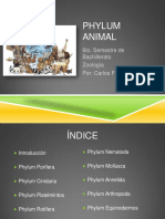 Phylum - Animalia