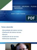 Udep - Clase 1 - Sistema Nervioso