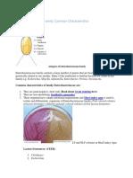 Mekanisme Timbulnya Resistensi Antibiotik Pada Infeksi Bakteri(1)