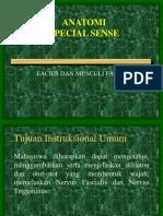 Kuliah Ss (Fasciei)