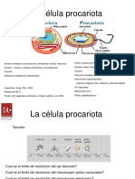 La Celula Procariota