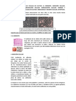 Apuntes Cultivos celulares e ingeniería tisular UA