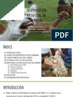 Inseminación Artificial Alpacas