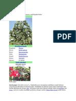 Artikel Botani Farmasi