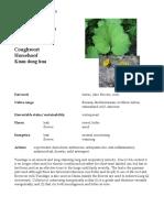 Tussilago Materia Medica herbs