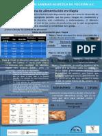 Alimentación tilapia.pdf