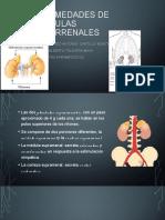 Endocrino REPASO