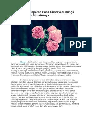Contoh Teks Laporan Hasil Observasi Bunga Mawar Beserta Strukturnya