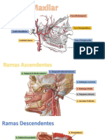 Arteria Maxilar.pptx