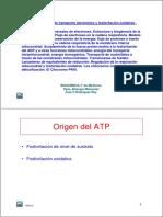 Tema20_cadena_transporte.pdf
