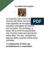 Datos Que No Sabías de Los Gatos