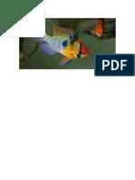 ikan.docx