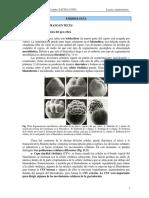 Segmentacion_Gastrulacion_Vertebrados_Gilbert (1).pdf