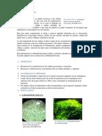 Informe - Celula Eucariota y Procariota