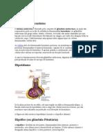 Glândulas e hormônios