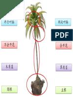 植物的部位打印 - Copy