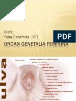 Organ Genetalia Feminina