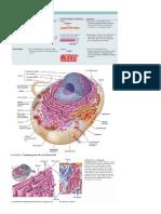biologia moderna.docx
