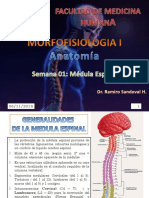Semana 01 Medula Espinal Anato 2