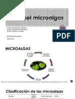 Biodiesel Microalgas