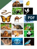 Animales imágenes