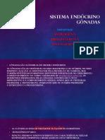 Sistema Endócrino Gônadas