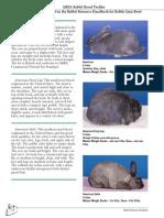 Rabbit Breed Profile