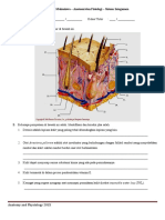 Anatomy and Physiology Student Worksheet - Integumentary System