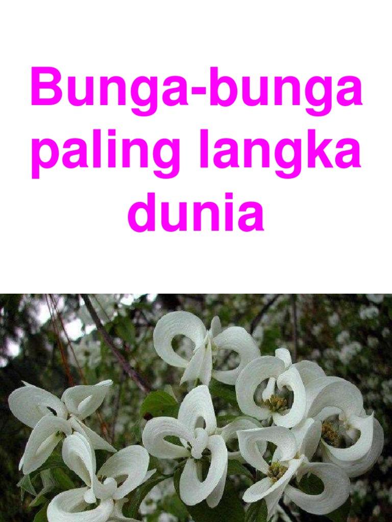 Download 930 Koleksi Gambar Bunga Bunga Langka HD Gratid