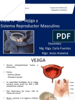 Clase 18 Reproductor Masculino (1)