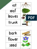 Kindergarten Science Vocab Plants Flower