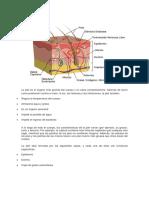 La Piel Inyectoterapia