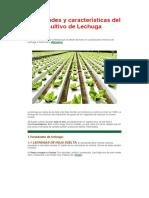 Variedades y Características Del Cultivo de Lechuga