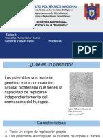 Genetica plasmidos
