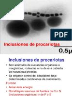 Inclusiones de Procariotas