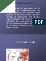 ESPERMATOGENESIS.ppt