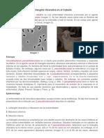 Linfangitis Ulcerativa en El Caballo