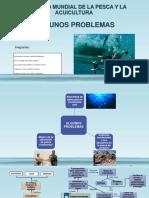 Primera Expo- Problemas_ FAO_Pesca Incidental