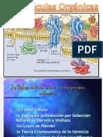 bioelementos-y-biomolculas abb 2016.pptx