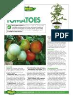 BP_tomatoes_2016.pdf