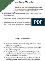 Sistem Syaraf.ppt