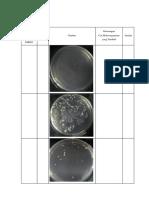 Gambar Praktikum Mikro Isolasi