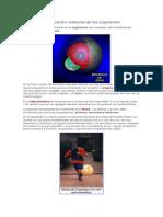 Composición molecular de los organismos.docx