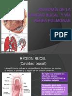 Anatomía de La Cavidad Oral y Vía Aérea