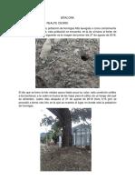 Bitacora Yucent Realpe Osorio