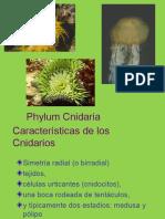 cnidarios-101102125855-phpapp02