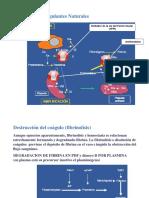 fibrinolisis