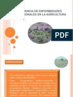 INCIDENCIA DE ENFERMEDADES PROFESIONALES EN LA AGRICULTURA diapositivas