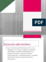 Musculos de Lso Mienbros Superiores